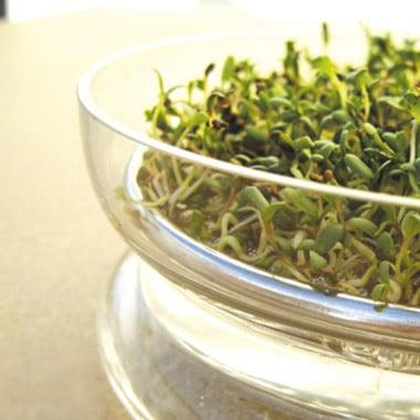 Conservez vos restes de repas dans des récipients en verre/acier inoxydable