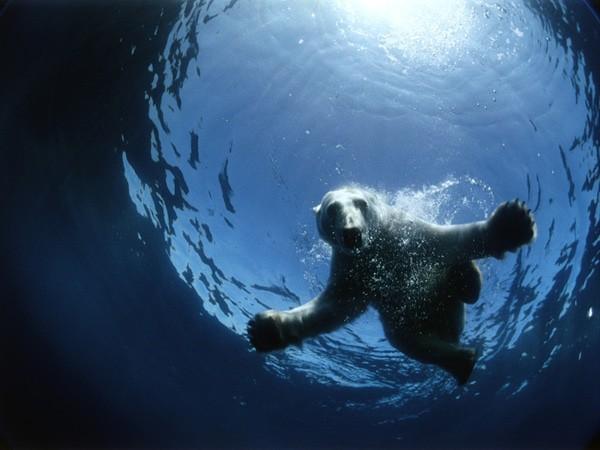 En Arctique, les déchets envahissent les abysses