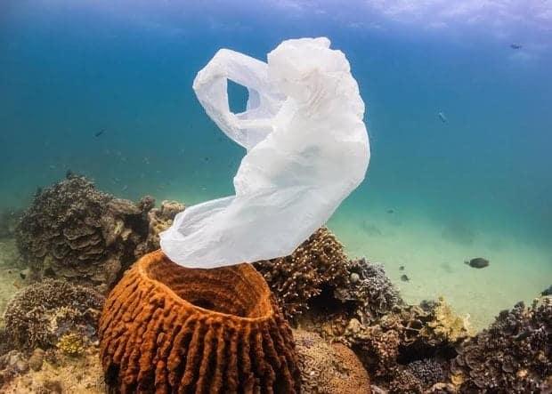 «plus de plastiques que de poissons dans l'océan en 2050…»